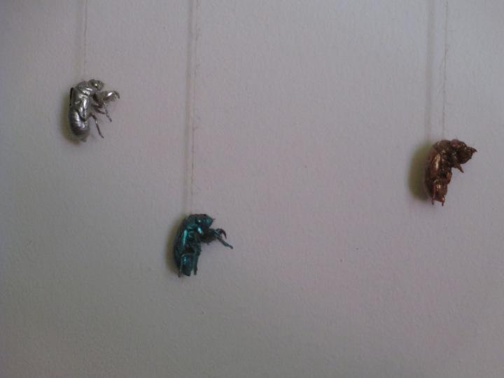 cicada art