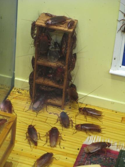 Cockroach House I