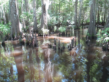 Honey Island Swamp Tour IV