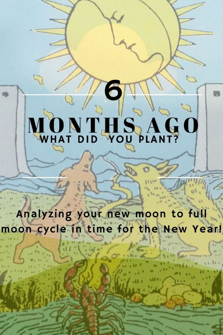 Full Moon: What Did You Plant 6 MonthsAgo?